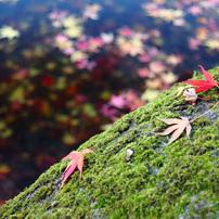 みちのく落葉の彩2013