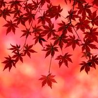 都会の大庭園 小石川後楽園と椿山荘の紅葉