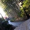 8.竹林の魅力