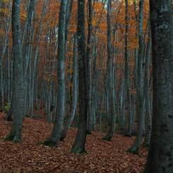 黄落の美人林 (1)