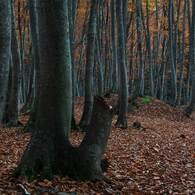 黄落の美人林 (3)