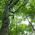 夏の美人林 (6)