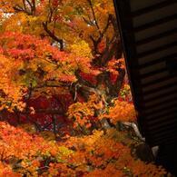 本土寺・秋 (3)