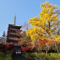 本土寺・秋 (15)