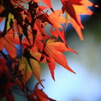 定光寺とその周辺の秋