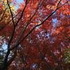 秋の奥多摩と雲取山