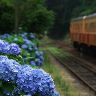 紫陽花の待つ駅 1