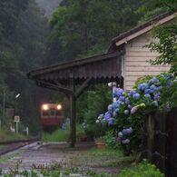 紫陽花の待つ駅 2