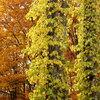 森の風「四季の森物語」