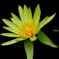 ~Flower~
