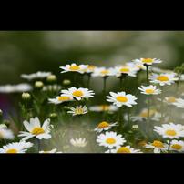 季節を彩る花々part.2