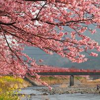 一番早い春