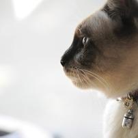 実家の猫。