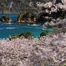 黄金崎の春 -S -T