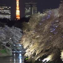 千鳥ヶ淵 2014 桜
