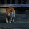 鎌倉・妙本寺の主