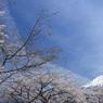 青空と富士と桜と (T)