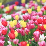 Spring is in full bloom.