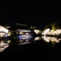 京都・桜浪漫譚⑮(紅しだれコンサート2014)