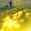 春色の散歩道Ⅱ
