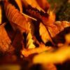 秋の木の葉