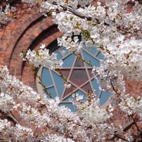 春の五稜星