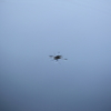 water strider on the water surface