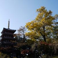 本土寺の紅葉ぱ~と1