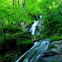 飛騨の森、清流