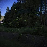 銀河鉄道 - 流星の舞 -