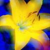 黄と青のブルース