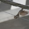 珍しくない鳥たち part-2