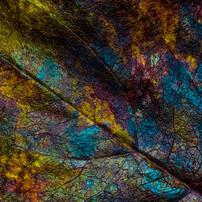 アートな枯れ葉