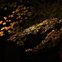 光と影 5