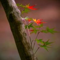 紅葉(2014年秋)
