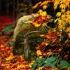 秋の艶 2014