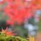 秋 落ちて