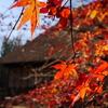 古民家の秋Ⅷ