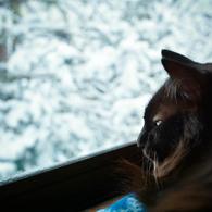 Snowy morning (reo)