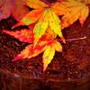 一秋の夢2