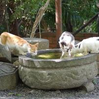 哲猫たち・・・