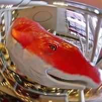 ⑤カメラ内蔵魚眼フィルターでさらに