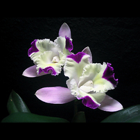 季節を彩る花々part.3