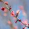 梅のかおり