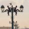 連なる街灯