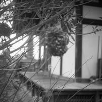 般若寺冬景④