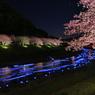 夜桜☆流れ星 -1