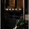 「春の足跡 小江戸川越散歩65