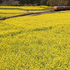 春の小湊鉄道