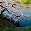桜色のドラマ